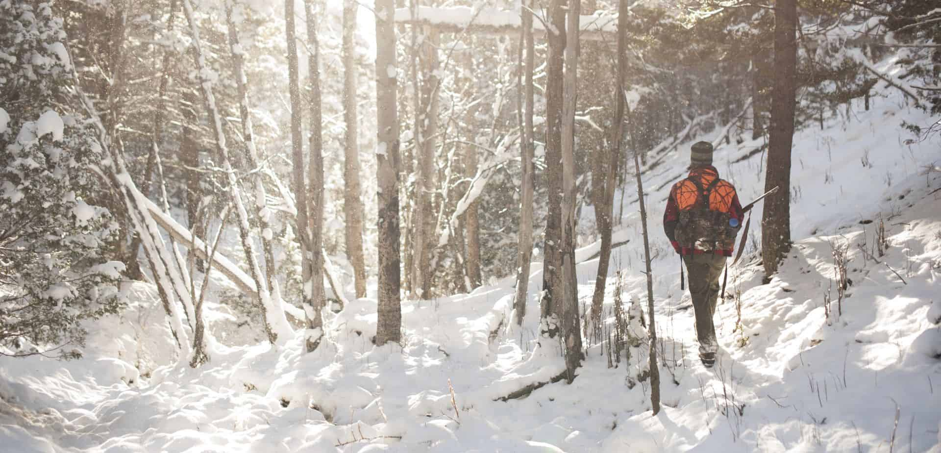 Hunter Snow Trees